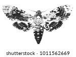 Hawkmoth Death\'s Head Moth...