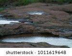 drops of rain  small water... | Shutterstock . vector #1011619648