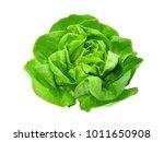 Green Butter Lettuce Vegetable...