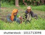 amravati  maharashtra  india ... | Shutterstock . vector #1011713098