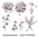 set of peony  flax  brown... | Shutterstock .eps vector #1011769303