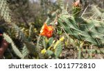 Vegetation Formed By Cactus In...