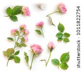 set of beautiful pink roses and ... | Shutterstock . vector #1011822754