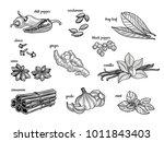 set of spices. black pepper ...   Shutterstock .eps vector #1011843403