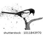 black and white bird and spray... | Shutterstock . vector #1011843970