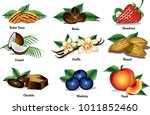 a gallery of common flavors for ... | Shutterstock .eps vector #1011852460