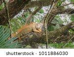 bright colored male green... | Shutterstock . vector #1011886030