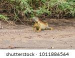 bright colored male green... | Shutterstock . vector #1011886564