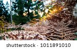 natural farn of the forest | Shutterstock . vector #1011891010