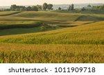 morning light glow on a... | Shutterstock . vector #1011909718