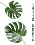 tropical leaves monstera on... | Shutterstock . vector #1011921874
