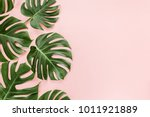 Tropical leaves Monstera on pink background. Flat lay, top view