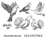 doves hand drawn illustration.... | Shutterstock .eps vector #1011927463