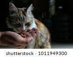 Stock photo beautiful cat pussy my beautiful funny cat 1011949300
