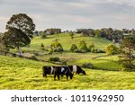 australian countryside.... | Shutterstock . vector #1011962950