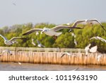laridae flying in the sky ... | Shutterstock . vector #1011963190
