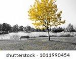 empty park bench under golden... | Shutterstock . vector #1011990454