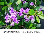 Small photo of Close up of Antidesma acidum flower in garden