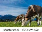 cows in meadow | Shutterstock . vector #1011994660