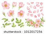 dog rose blooms. wild rose... | Shutterstock .eps vector #1012017256