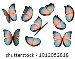 butterfly vector illustration.... | Shutterstock .eps vector #1012052818