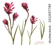 australian native flower pink... | Shutterstock .eps vector #1012057789