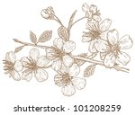 Illustration Flowers Of The...