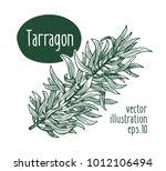 tarragon branch. vector... | Shutterstock .eps vector #1012106494