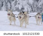 sledge dogs in the snowy winter | Shutterstock . vector #1012121530