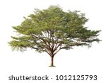 tree isolated on white... | Shutterstock . vector #1012125793