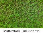 green hedge  full frame | Shutterstock . vector #1012144744