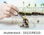 scientist testing gmo plant in... | Shutterstock . vector #1012198210