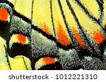 macro shot of the wing of a... | Shutterstock . vector #1012221310