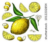 lemon vector drawing. summer... | Shutterstock .eps vector #1012232854