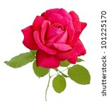 Red Velvet Rose Isolated On...