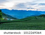 tea plantation in taiwan | Shutterstock . vector #1012269364