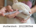 women giving a drug to a cat... | Shutterstock . vector #1012280566