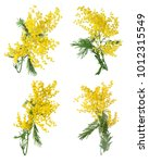 Mimosa Flowers Set Isolated On...