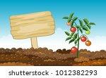 gardening banner. growth tomato ... | Shutterstock .eps vector #1012382293