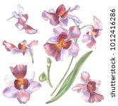 singapore flower  illustration... | Shutterstock . vector #1012416286