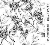 vector seamless herbal pattern... | Shutterstock .eps vector #1012419754