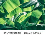 banana leaves  light and shadow ... | Shutterstock . vector #1012442413