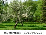 outdoor spring view of... | Shutterstock . vector #1012447228