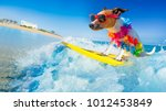 Stock photo jack russell dog surfing on a wave on ocean sea on summer vacation holidays with cool sunglasses 1012453849