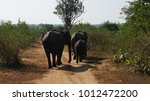 elephants marching throught the ... | Shutterstock . vector #1012472200