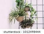 arrangement of hanging wicker... | Shutterstock . vector #1012498444