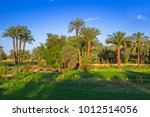 Date Palm Trees Plantation In...