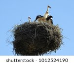 huge stork nest with young...   Shutterstock . vector #1012524190