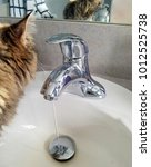 Small photo of tabby cat on bathroom vanity sink with faucet and running water in mirror reflection