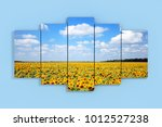 Sky With Fild Of Sunflowers...